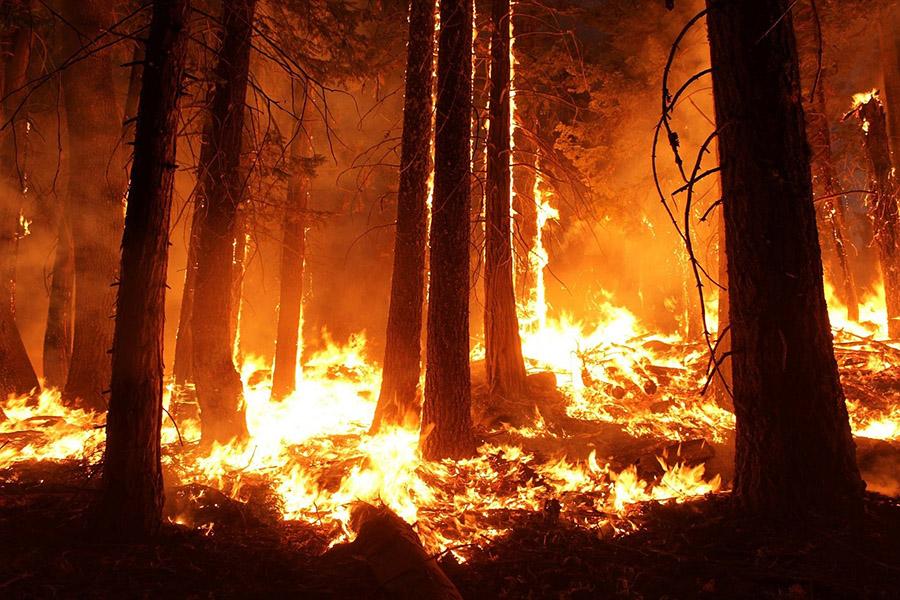 Imagen de un incendio en un bosque, la tecnología ayuda a reducir los accidentes laborales y a la prevención de riesgos laborales de los bomberos